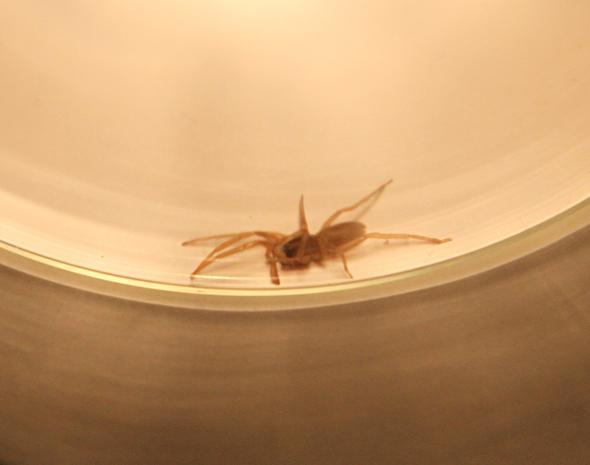Welche Spinne ist das? - (Tiere, Name, Spinnen)