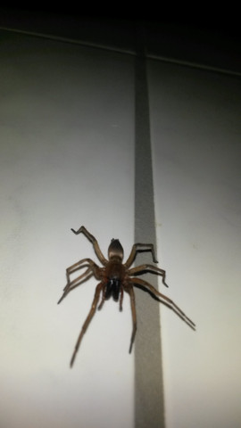 Spinne - (Rasse, Bad, Spinne)