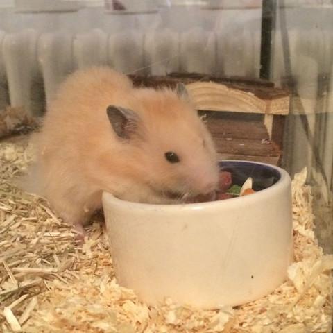 Und so sieht der kleine aus  - (krank, Hamster, hintern)