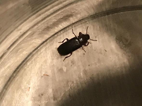 Das Krabbelte Auf Meinem Teppich Ist Das Eine Kakerlake Tiere