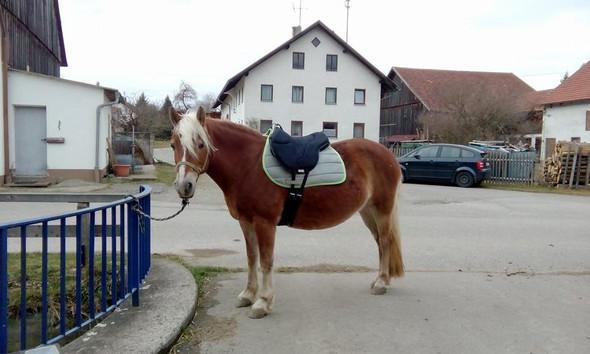 Meine Stute  - (reiten, baumlos, Ride-On-Pad)