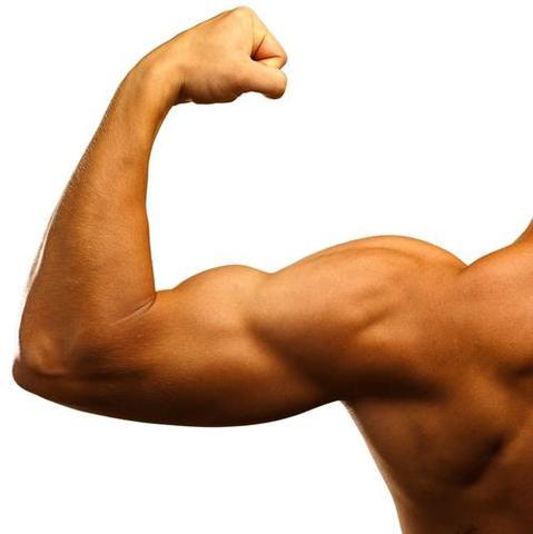 Definierte und Trainierte Muskeln ohne Training (Muskelaufbau)