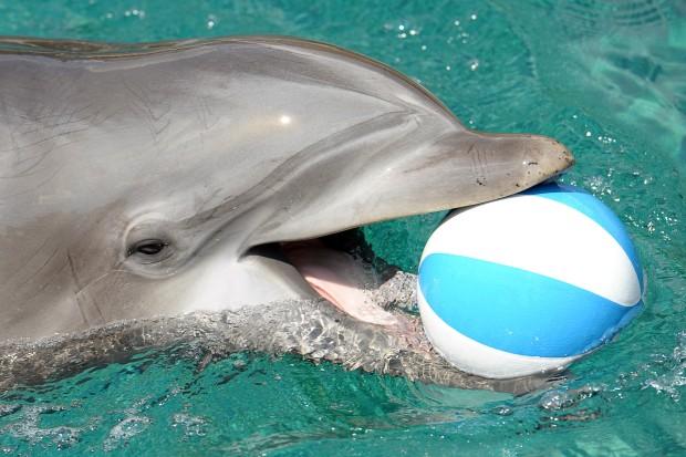zoo delfine