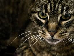 sosiehtderübeltäteraus - (Katze, katerder, kamiktze)