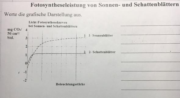 Diagrammauswertung in Biologie? (Schule, diagramm auswerten)