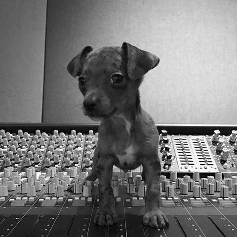 Welche Hunderasse? 🐶   - (Hund, Hunderasse, Kleiner HUnd)