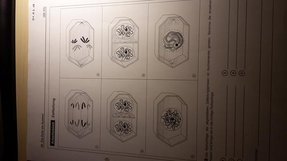 Zellteilung - (Biologie, Zellteilug)