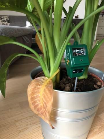 - (Pflanzen, Garten, Pflanzenpflege)