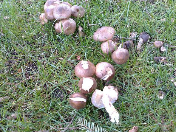 Pilze - (Biologie, Wald, Pilze)