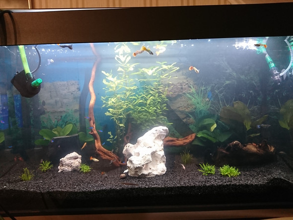 Diffusor 220l aquarium ja oder nein?