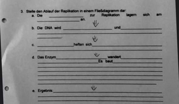 DNA-Replikation Ablauf?