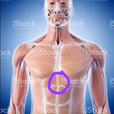 Der Kreis beschreibt wo die drückenden Schmerzen sitzen.  - (Schmerzen, Bauch, Brust)