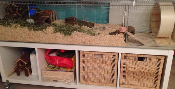 Der Käfig - (Hamster, Zwerghamster, hamsterhilfe)