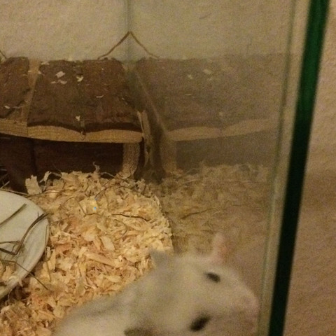 Hier sieht man wie er da wo man die Tür aufschiebt kratzt und beißt - (Terrarium, dsungarischer zwerghamster)