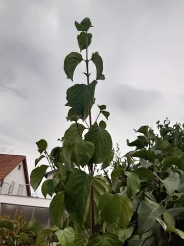 - (Haustiere, Pflanzen, Baum)