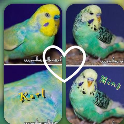 Meine beiden Vögel 🐥 - (essen, Wellensittich)