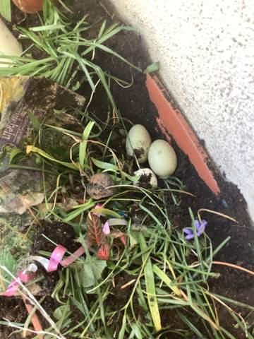 Ei auf dem Balkon gefunden, was nun?