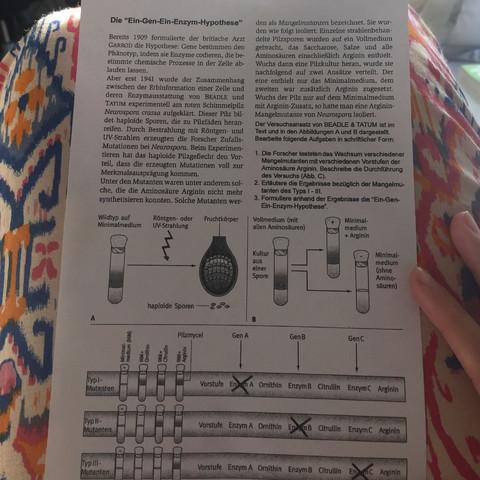 Ein-Gen-Ein-Enzym-Hypothese von Beadle und Tatum? (Biologie, Genetik)