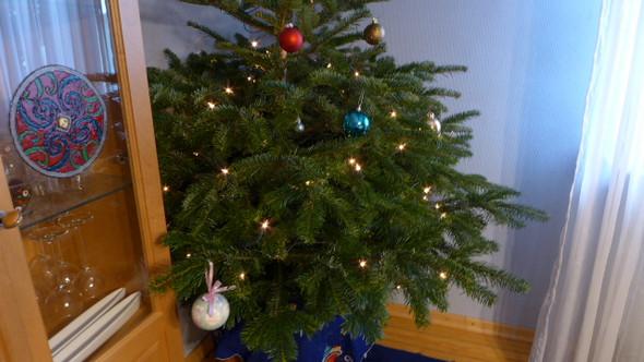 Ein schöner kleiner Tannenbaum muß nicht teuer sein. Was zahlt ihr für euren Tannenbaum?