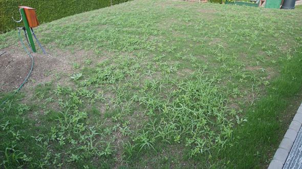 Gesamte Gesäte Fläche - (Garten, Pflanzen, Gras)