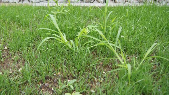 (Un)kraut in groß - (Garten, Pflanzen, Gras)