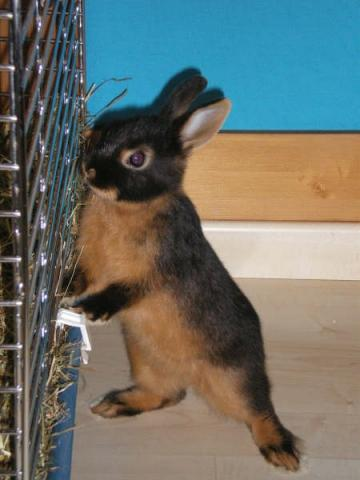 - (Tiere, Kaninchen, Hasen)