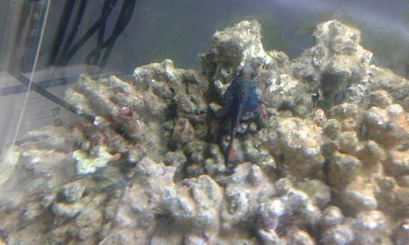 Bild 2 - (Aquarium, Aquaristik, meerwasser)