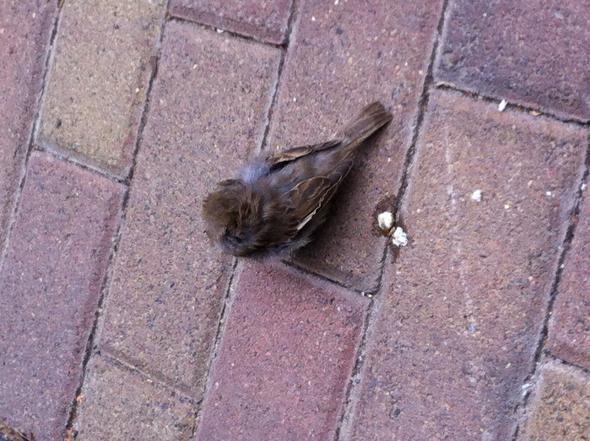 Der Vogel - (Vögel, einsam)