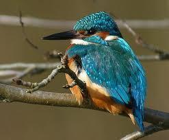 Eis Vogel - (Schule, Biologie, Vögel)