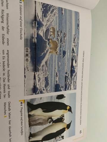 """Eisbär und Pinguin begegnen einander in der Natur nie.""""?"""