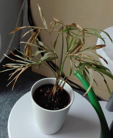 Betroffene Pflanze - (Pflanzen, Blumen, Nahrungsmittel)