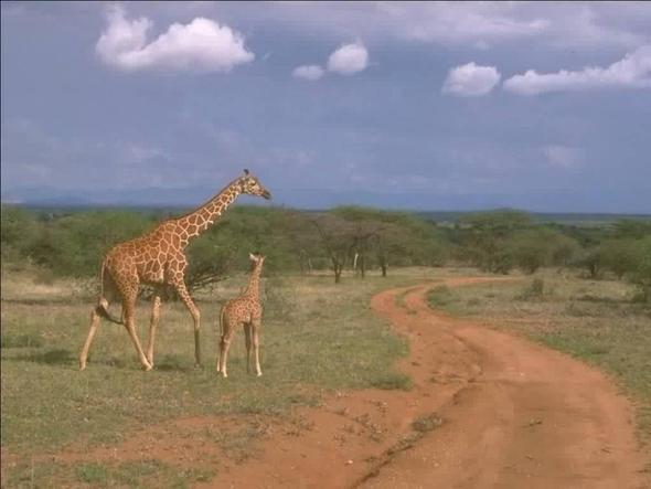 lebensraum 2 mit giraffen - (Freizeit, Biologie, Erdkunde)