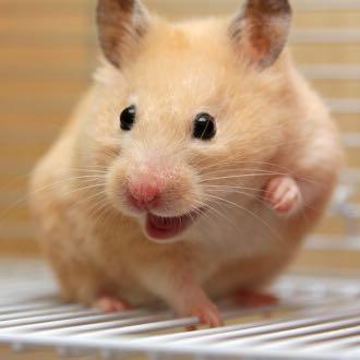 welche englischen namen sind passend f r weibliche hamster tiere englisch weiblich. Black Bedroom Furniture Sets. Home Design Ideas