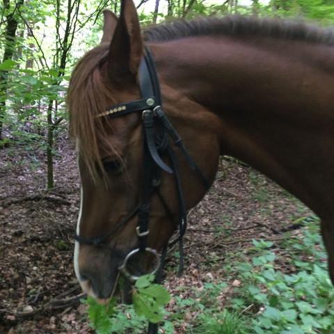 Der Hals vor 2 Wochen - (Pferde, Muskeln, reiten)