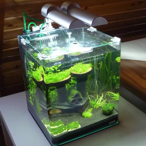 Dennerle Nano Cube - (Tiere, Wasser, Fische)