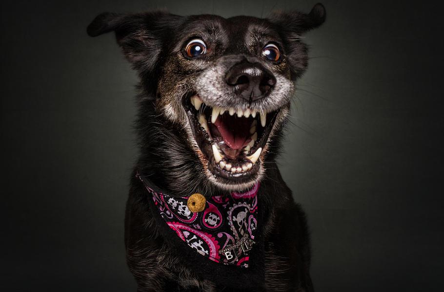 erkennen hunde nur schon  bellen ob ein anderer hund