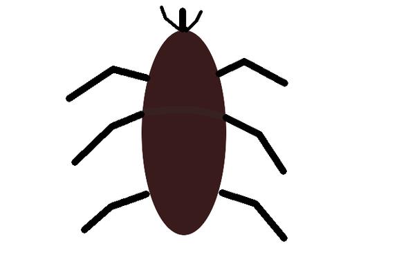 Insekt - (Insekten, erkennen)