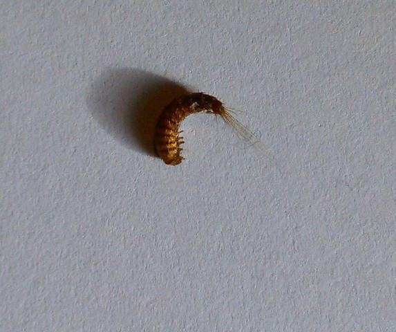 erkennt jemand folgende insekten gesundheit und medizin tiere. Black Bedroom Furniture Sets. Home Design Ideas