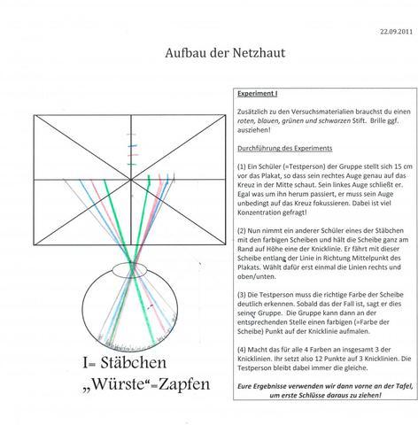 Erläuterung Zapfen und Stäbchen der Netzhaut (Vorgang des FArbsehens ...