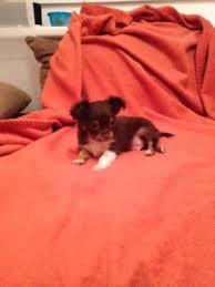der welpe - (Hund, Haustiere, 18 Geburtstag)