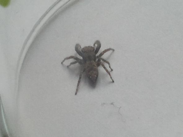 Die Spinne von hinten - (Art, Spinne)