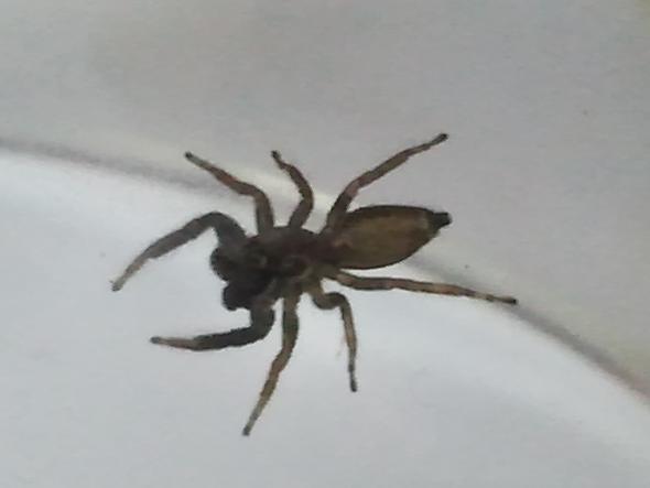 Die Spinne von unten - (Art, Spinne)