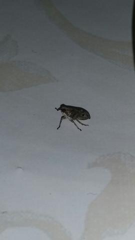Einmal von der Seite - (Natur, Insekten, Käfer)