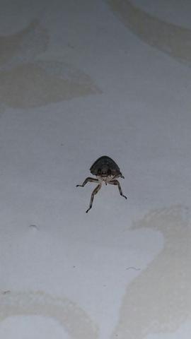und einmal von vorn - (Natur, Insekten, Käfer)