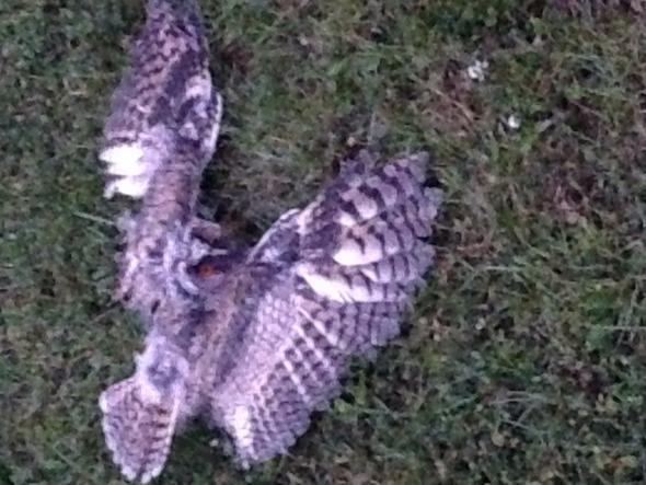 Verwundetes Tier (von katze angegriffen),flog dann wieder in bäume - (Freizeit, Garten)