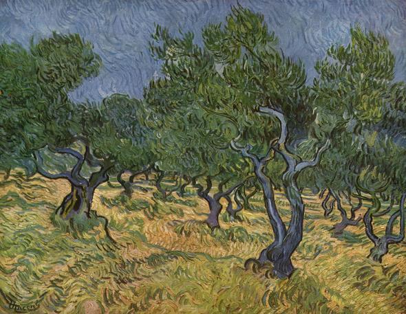 Olivenhain - (Bilder, Kunst, malen)