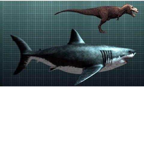 Megalodon im vergleich zu einem T-REX - (Hai, Existenz, megalodon)