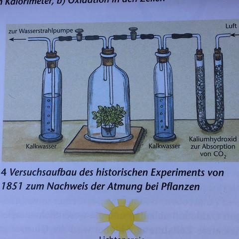 Versuchsaufbau des historischen Experiments von 1851 - (Biologie, Hausaufgaben, Bio)