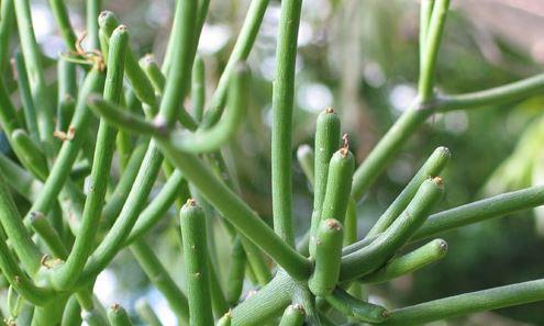 Bild 3 - (Krankheit, Biologie, Pflanzen)