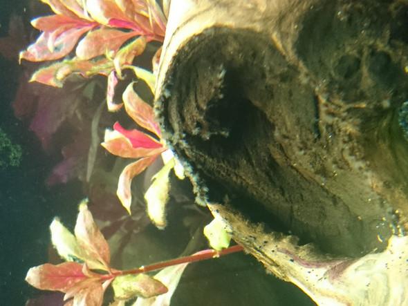 - (Pflanzen, Fische, Aquaristik)